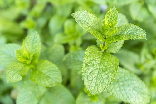 긍정적 기운을 가져다 주는 10가지 식물