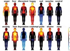 emotions-in-the-body copy