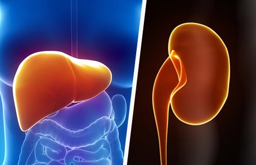 How to Naturally Keep Your Liver and Kidneys Healthy