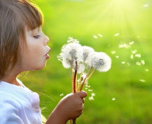 Child blowing a bunch of dandelions