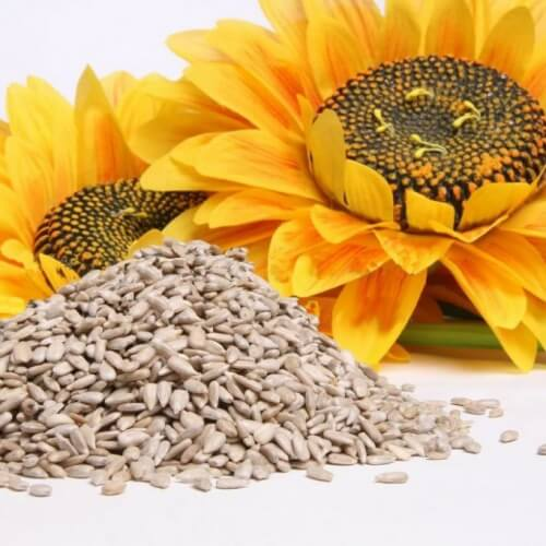 Sunflower seeds as remedies to quit smoking