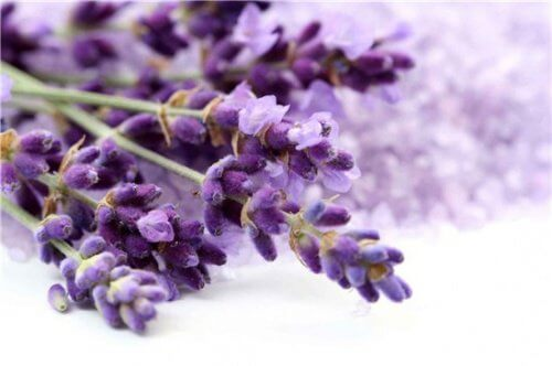 Lavender branch with flowers