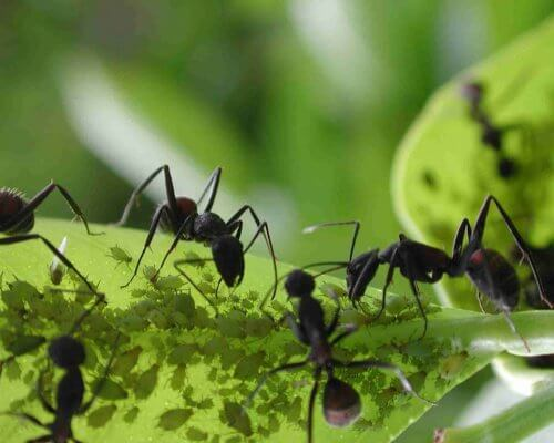 Ants on leaves.