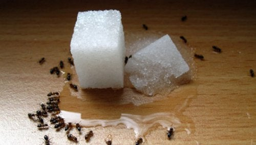 Natural and Cheap Ant Repellents