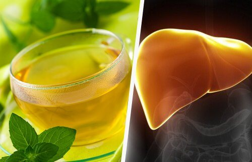 The plant for liver health on the left and the liver on the right