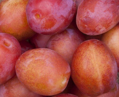 Prunes are made from plums.