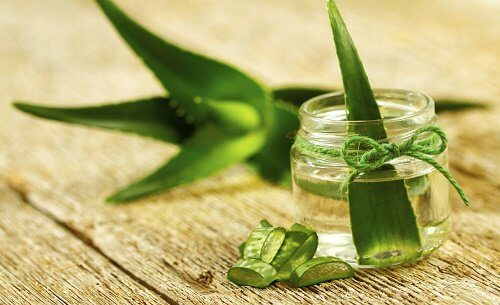 How to grow aloe vera inside