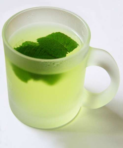 Mint-lettuce-infusion-tea-500x602 treat irritable bowel syndrome