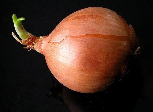 A large onion.