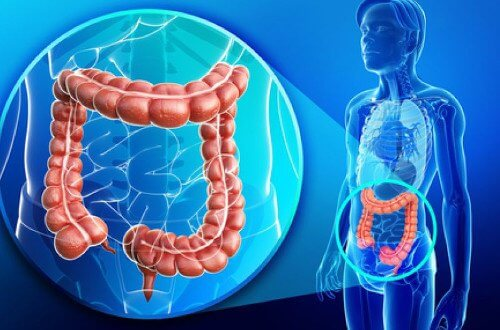 Tips for a Healthy Colon and Weight Loss