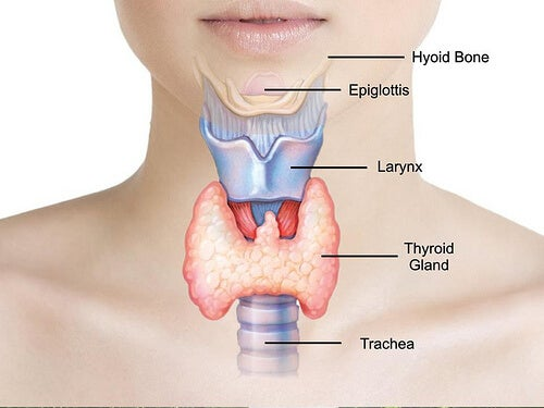 treat thyroid problems naturally