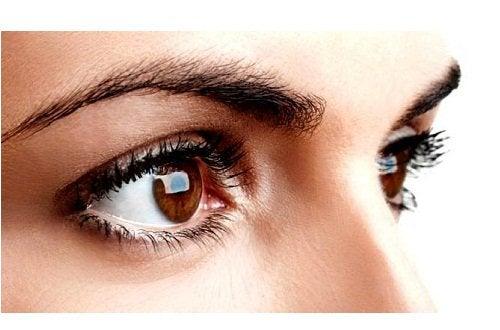 3 brown eyes