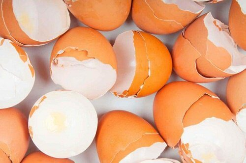 eggshell remedy
