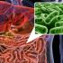 intestinal flora