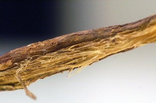 licorice-asimulator