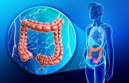 heal the intestines