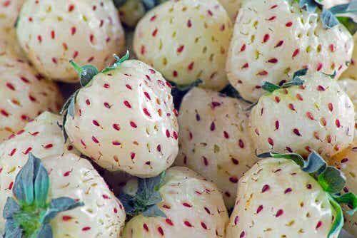Ever Heard of Pineberries or White Strawberries?