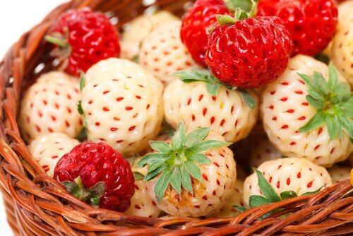 하얀 딸기 품종