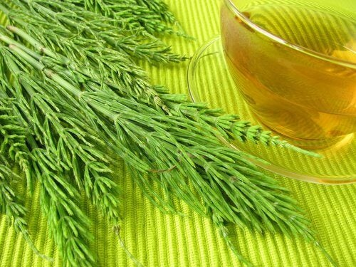 Horsetail plant and tea.