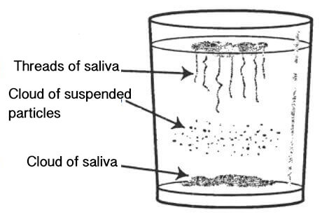 test for candida