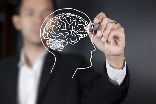 2 the brain