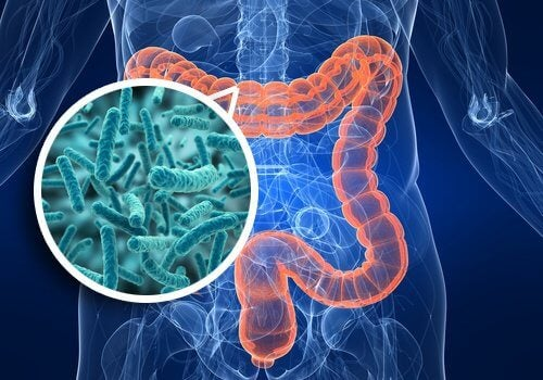 Your Intestines