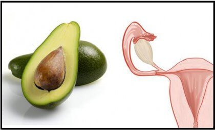 Avocado is one of the foods that resemble body parts