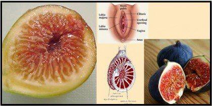 Kehonosia muistuttavat ruoat viikuna