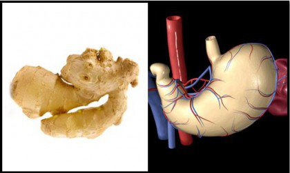 Ginger is one of the foods that resemble body parts