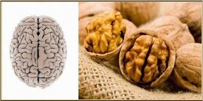 Kehonosia muistuttavat ruoat pähkinät