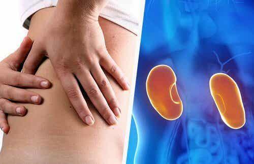 Effects of Salt on Kidney Health