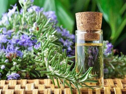 Rosemary Remedies for Better Circulation