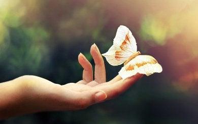 Tunneälykäs ihminen ja perhonen