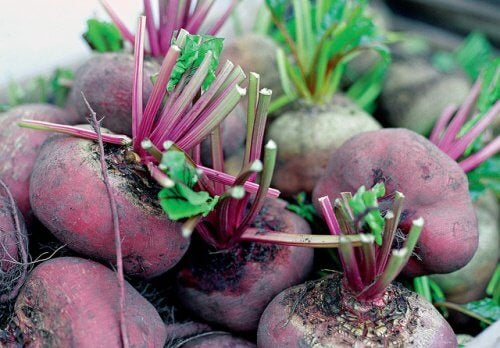Why You Should Eat Beets