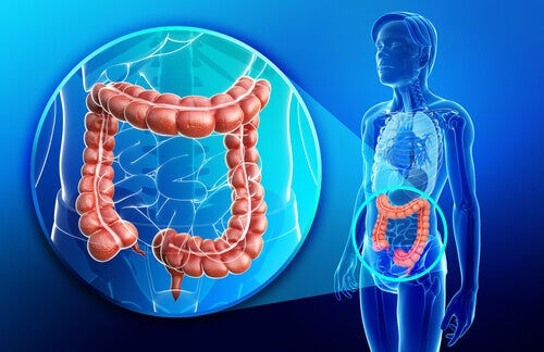 Crohn's disease related to digestive system