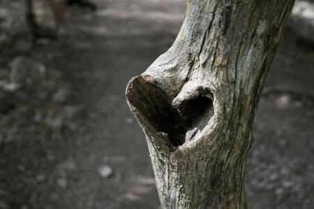 2 heart tree