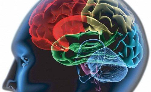 Aivojen osat
