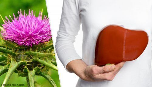 Fatty liver and milk thistle.