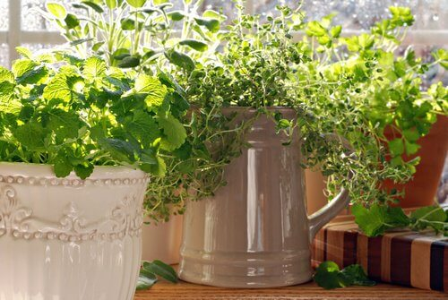Herbs that work as insect repellent