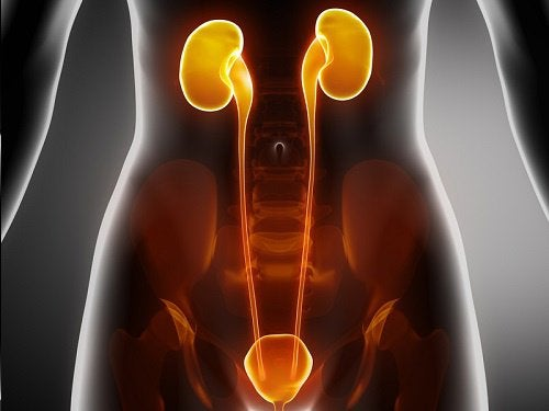 Treatment for Infections of the Bladder, Urethra, and Kidneys