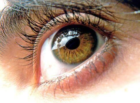 3 healthy eyes