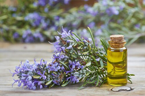 Some rosemary and rosemary oil.