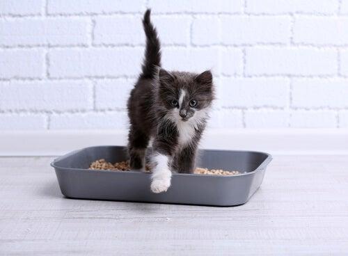 5 cat litter