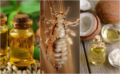 Essential oils are a good remedy against lice and nits.