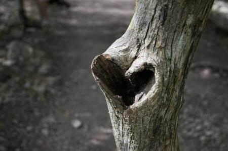 Sydän puussa