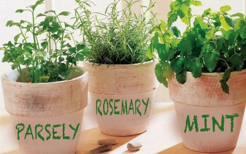 how to grow rosemary, parsley and mint at home