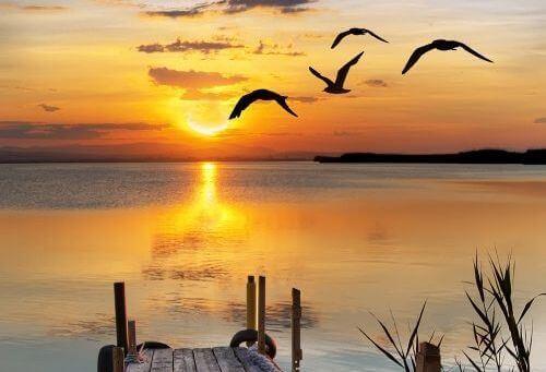 2 birds and beach