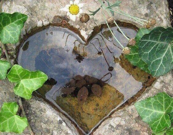 Sydämen muotoinen kuoppa