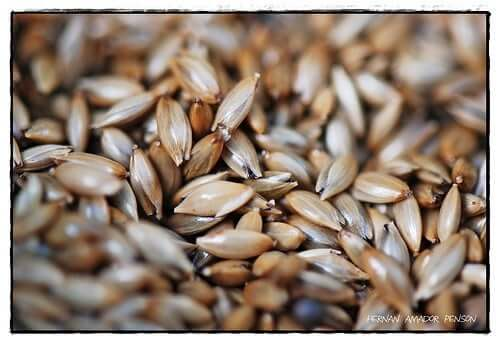 Benefits of Canary Seed for Cholesterol and Weight Loss