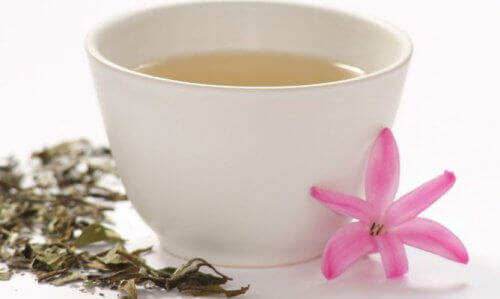 Cup of white tea rich in flavonoids